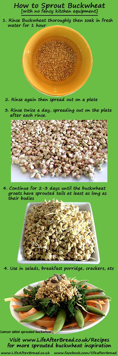 how to sprout buckwheat
